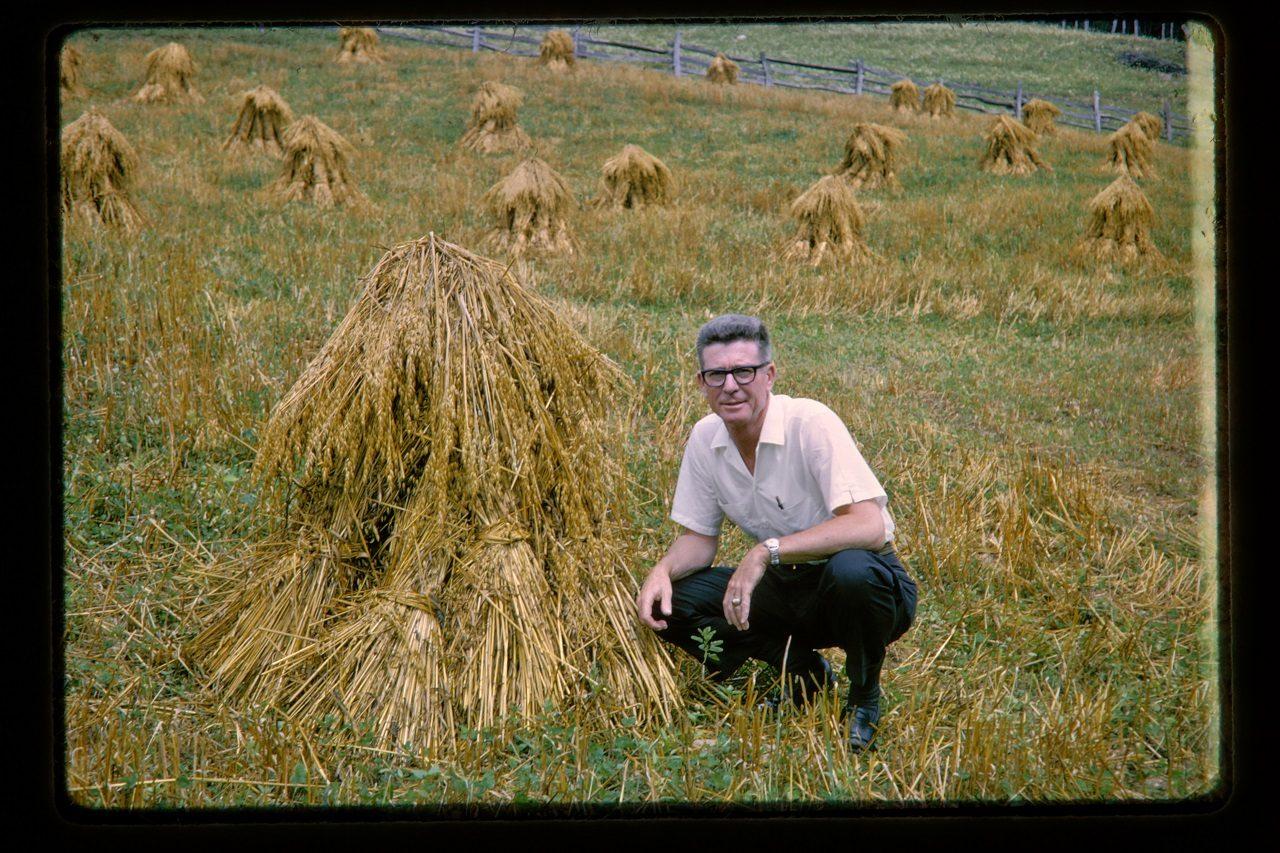 Haystacks, America, c 1962