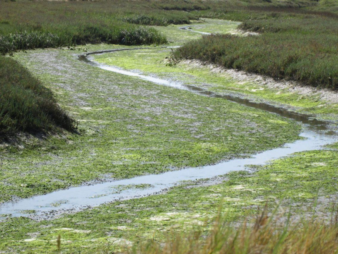 Wetlands, San Diego County