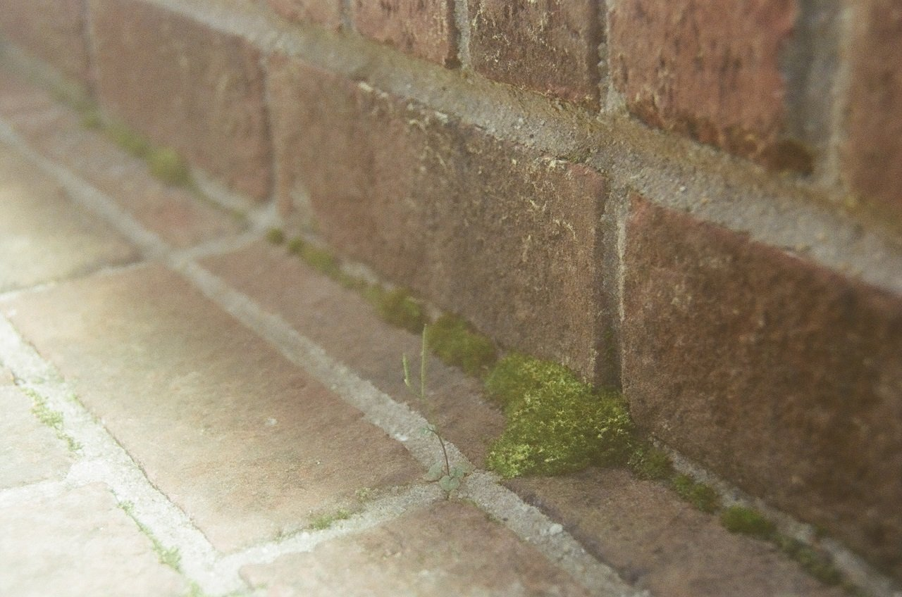 Moss, Front Stoop, North Carolina