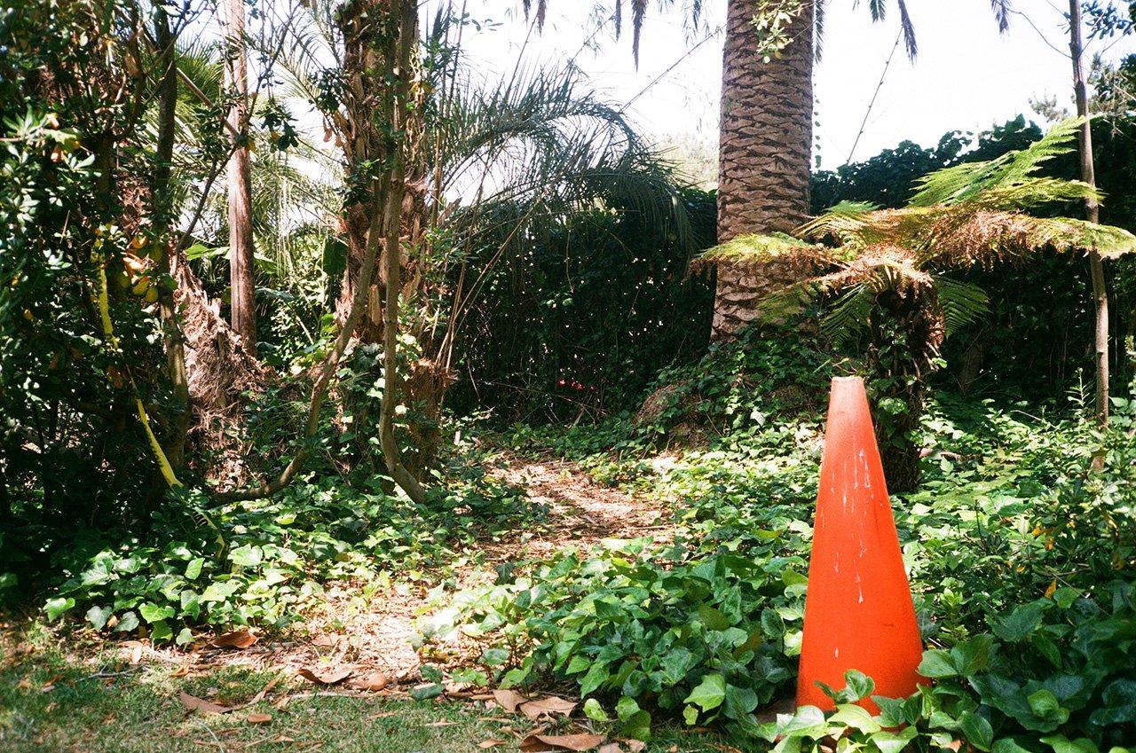 Traffic cone in the ivy, San Diego, California