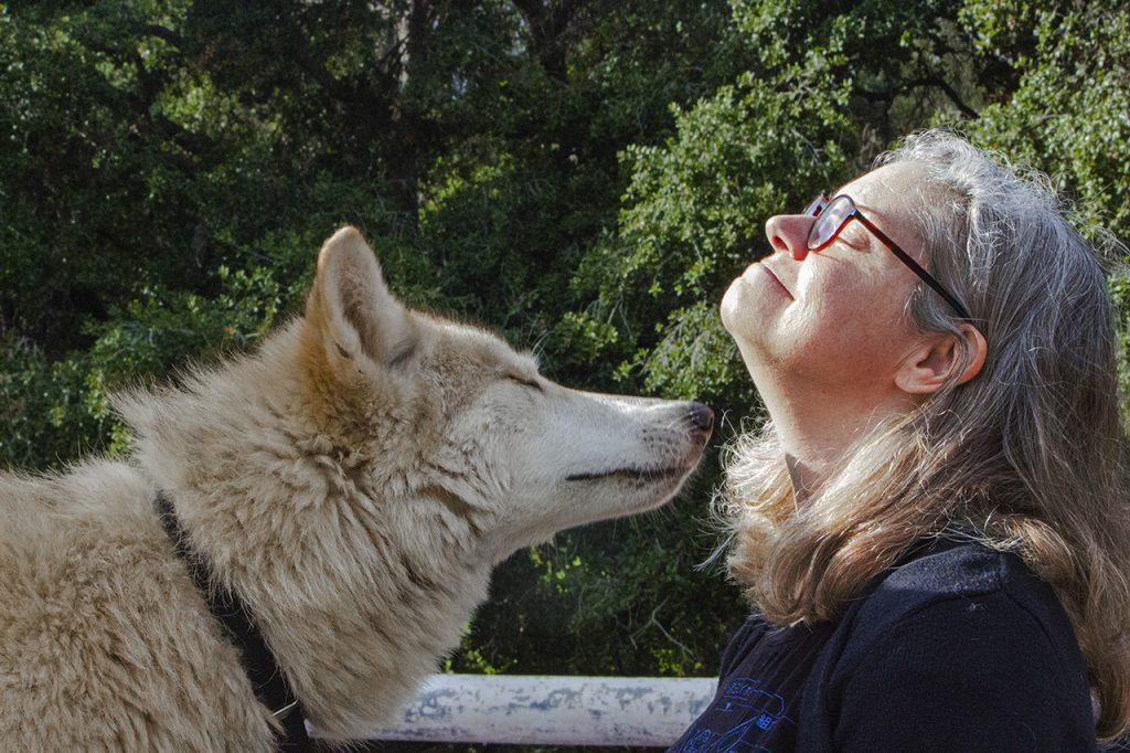 yari wolf dog