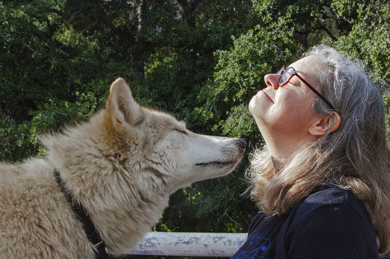 Yari and Lycan, Hybrid wolf dogs, Griffith Park, Los Angeles