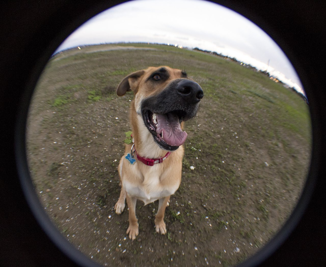 sarge fisheye view