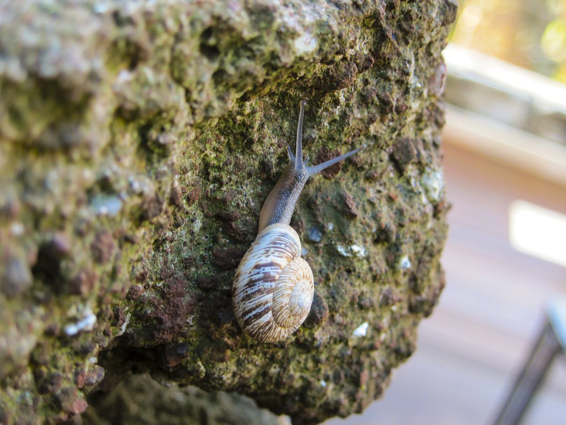 Snail on the Colosseum, Rome, 2013